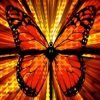 Bright butterfly abstract image