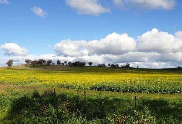 Coota field